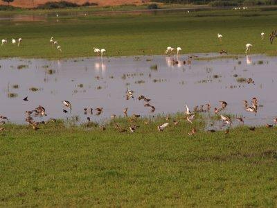 Birdwatching in Doñana, northern area