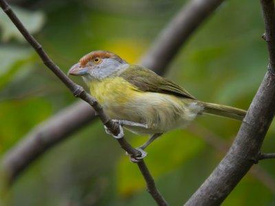 Birdwatching in South Doñana
