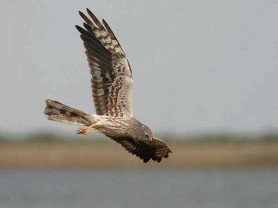 Iberia-Bird Medioambiente