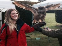 Falconry days