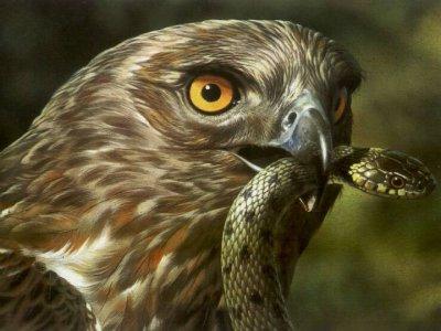 Nature Cabañeros Ornitología