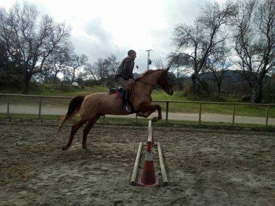 Summer camp horse riding El Escorial