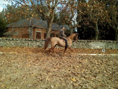 Horse riding lesson in Madrid, advanced level