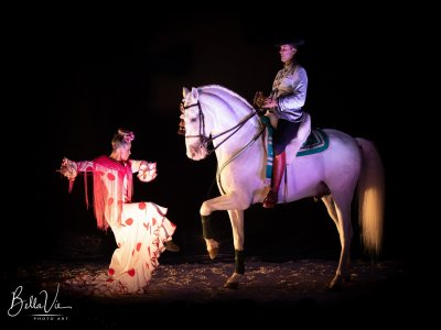 Horse spectacle for children in Malaga