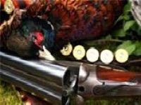 Improve your hunting skills.