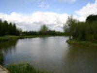 The Donut Pond