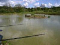The Kidney Pond