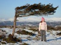 A winter mountain tree