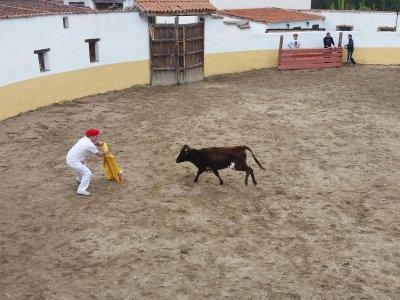 Capea in segovia with 2 cows & open bar