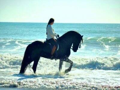 Horse riding beach route in Torremolinos