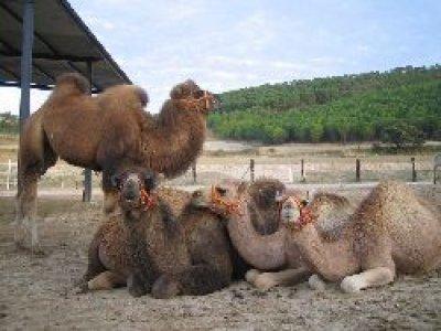 El Centauro Paseos en Camello