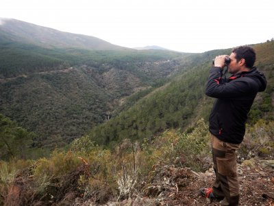 Ornithological route in Sierra de Gata, 3 hours