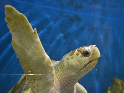 Acuario de Sevilla Aquariums