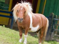 Pony Rides at Wheelgate Park Amusement Parks