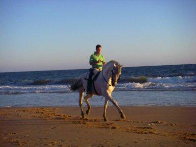 High Dressage Horse Riding Tour advanced riders