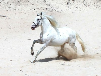 Horse-Riding Route at Cala Rajada, 1 Hour