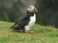 Child Fee - Skomer Puffin Adventure Boat Trip