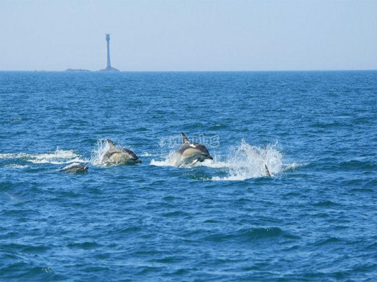 The cute dolphins!