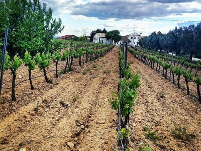 Wine Tourism & Electric Quad Route in Cofrentes