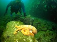 Diving and wildlife