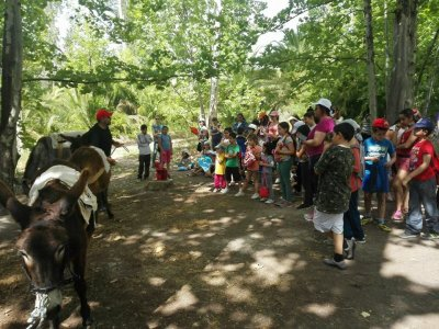 Ethnographic Guided Tour w. Donkeys, Schools