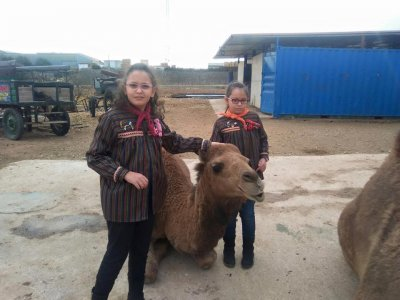 A 30-Minute Camel Ride in Valencia