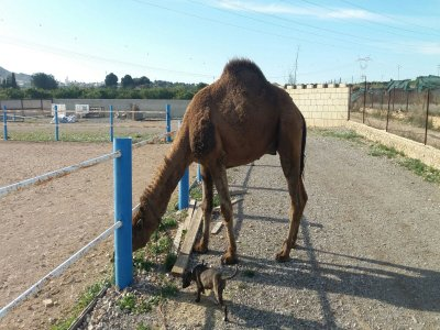 1h Camel Ride Natural Park of Turia