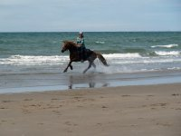 Beach hacking with Freerein Riding Holidays