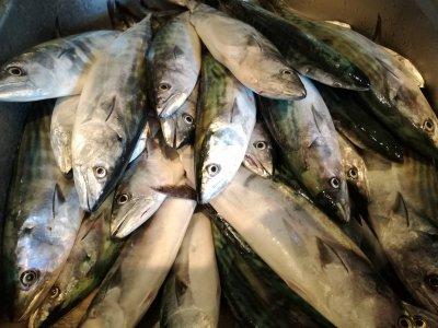 3-Hour Fishing Trip for 4 People in Garraf