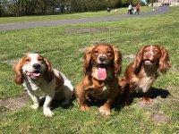 Bring everyone to Haigh Woodland Park