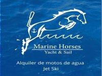 Marine Horses
