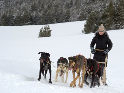 Dog Sledding in Individual Sled in Formigal, 2 h