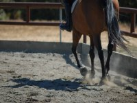 Enter the world of horse riding!