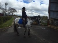 Come and visit us at Horse Haven Riding School