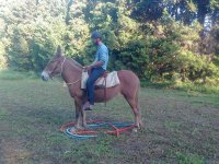 Open Hacking at Horse Haven Riding School