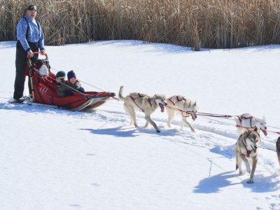 Dog Dragged Sled in Andorra Kids 2 km