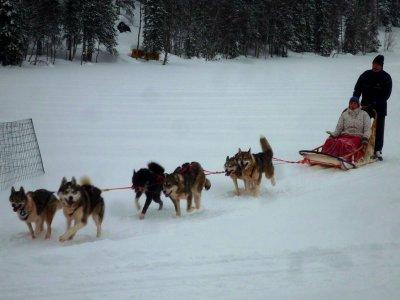 Dog Sledding for children in Grau Roig 5 km