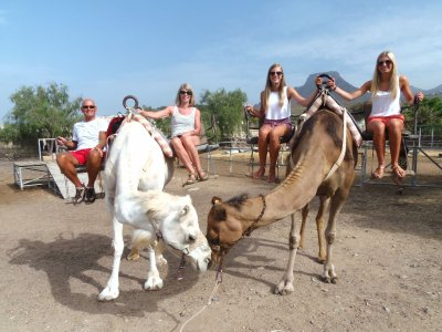 Camel ride for adults in Tenerife 40 min