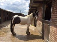 one of our horses at Willowbrook Riding Centre