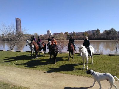 Horse riding along the Guadalquivir River 1 hour