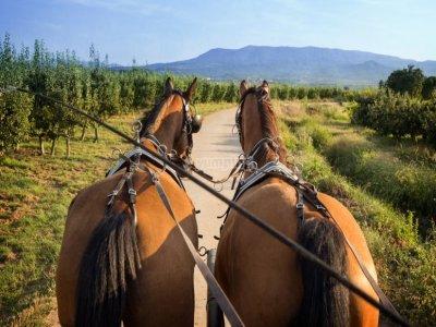 Horse carriage tour lunch San Torcuato 1h 30min
