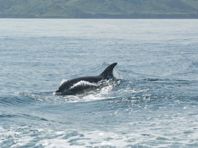 Specialised Charters Boat Trips