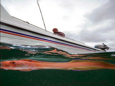 Specialised Charters Fishing Boats