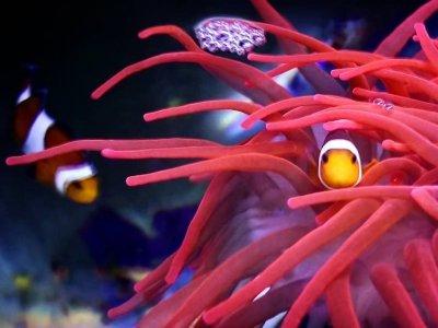 Aquarium Lanzarote Aquariums