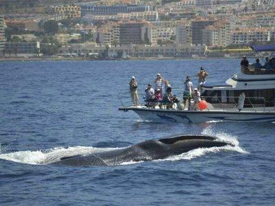 Travelin Lady Tenerife