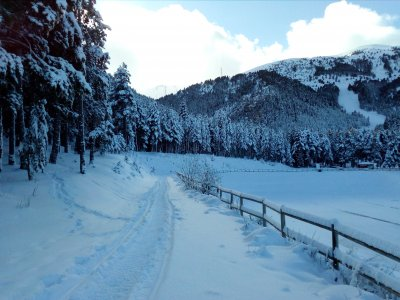 Snowshoes tour initiation in La Molina 2 hours