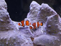 See some Clownfish