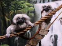 Amazing monkeys.