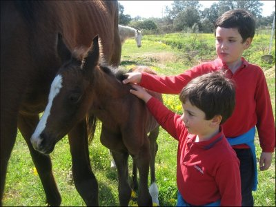 Birthday party with horses and ponies Cáceres