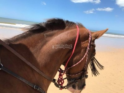 Individual riding class in Bajo Rocío 1 hour